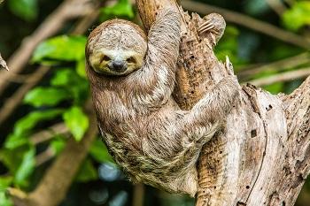 Amazone-regenwoud
